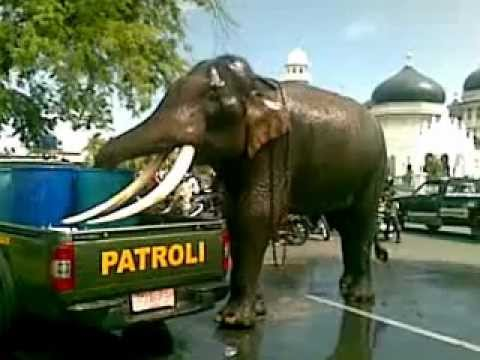 Gajah di Mesjid Baiturrahman Banda Aceh