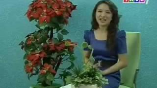 RAWALPINDI TENCH BHATTA  ABADI # 3 wwiTV   Watch THVL Live TV broadcasting from Vietnam