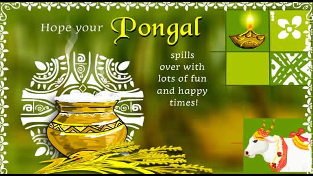 Happy Pongal 2017 Beautiful Wishes Greetings Whatsapp Video E