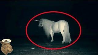 5 Criaturas Mitológicas Captadas En Cámara Y Vistas En La Vida Real