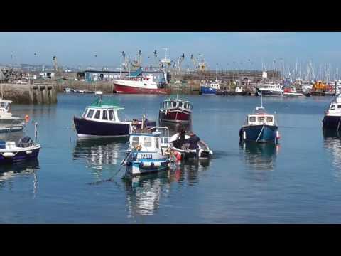 Brixham Harbour Dolphin Strandings 23/08/2016  Video1 of 8