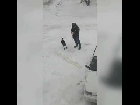 Полицейский из Рудного кормит бродячего пса