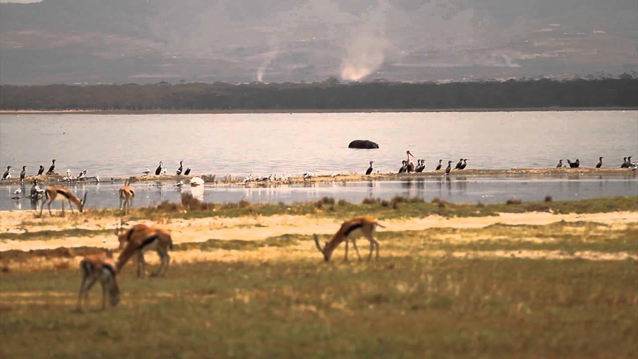Africa Stock Footage - Wildlife Nature Kenya Safari Landscape ...