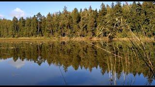 Рыбалка для души Лесное озеро