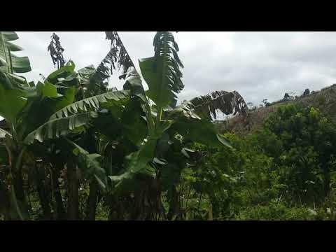La beauté d'ANDAPA. .. Madagascar