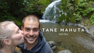 Unterwegs in neuseeländischen Wäldern - Vlog #47
