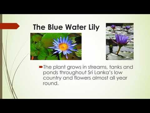 National Flower - Sri Lanka