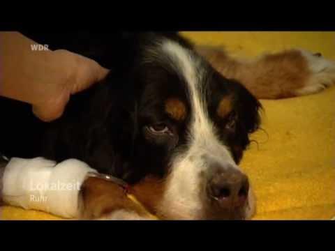 Lokalzeit Ruhr Blut gespendet - Kranker Hund in Recklinghausen braucht Hilfe