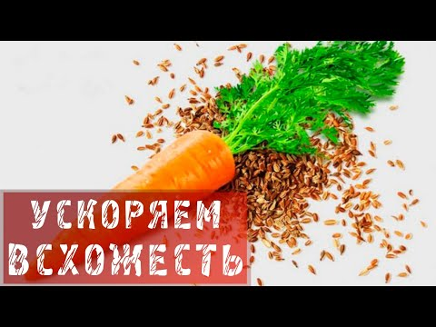 Вопрос: Как отличить семена петрушки от семян моркови?