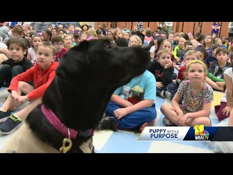 Camden, Smudge show their skills at Pershing Hill Elementary School