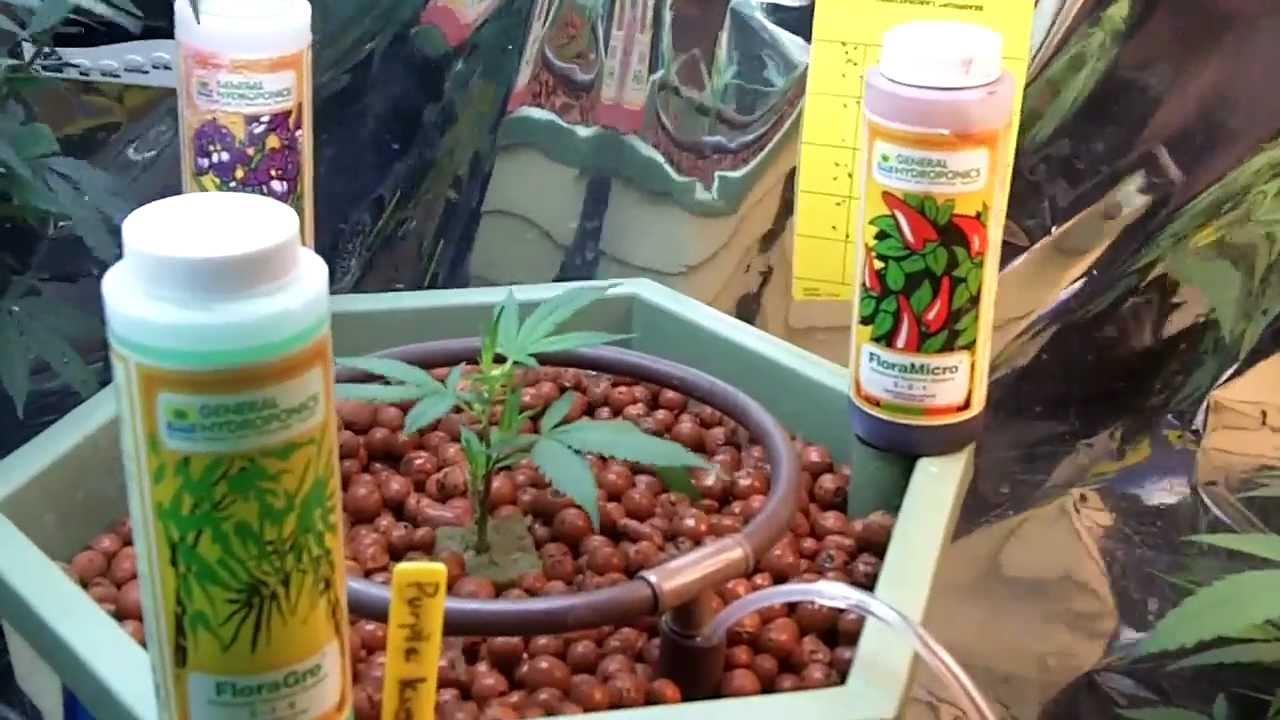 general hydroponics flora nutrients youtube