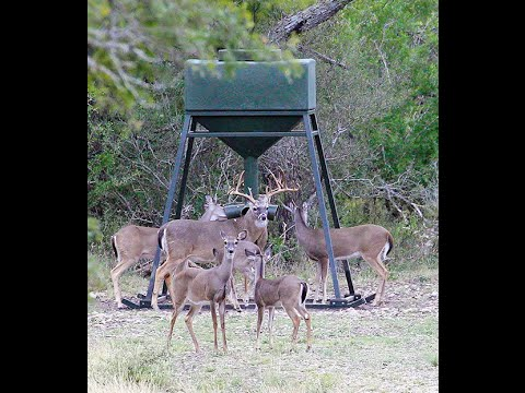 1,000 lb capacity Protein Gravity Feeder by Texas Hunter Products