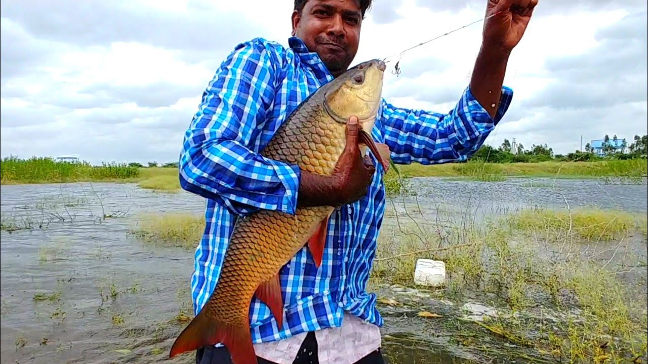 Best Fishing Technique| Big fish catching videos| Hindi video