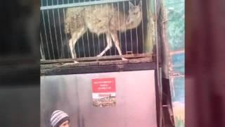 Я в зоопарке фото