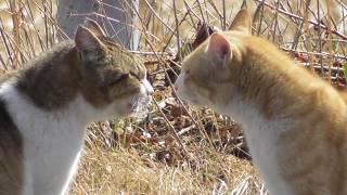 なかなか猫パンチがでたりしないです。 そもそも喧嘩じゃないのかな? ...