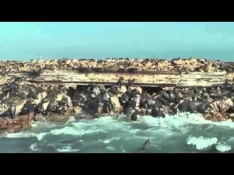 Grootbos, Marine Big 5 South Africa