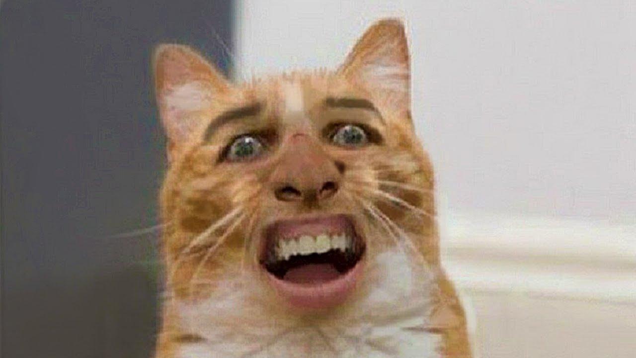 Смешные животные коты собаки и другие видео приколы 2018 (ТОПовая подборка) Смешные кошки