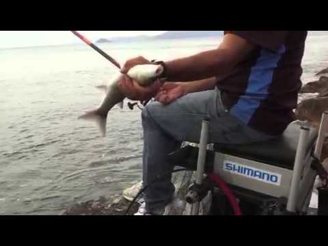 Pesca con la bolognese da riva con Marco Meloni e canna Shimano Fireblood TE4 short version 3