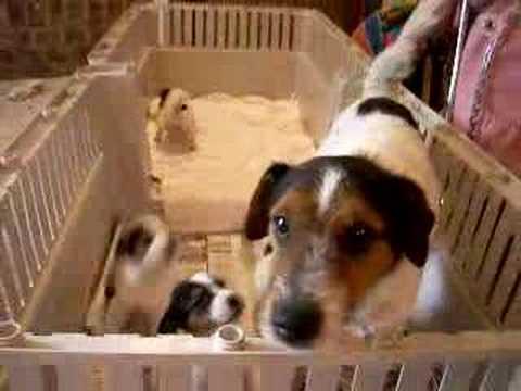 how to discipline train a dog