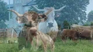 2017 en images dans l'élevage Aubrac de la famille Peyrac