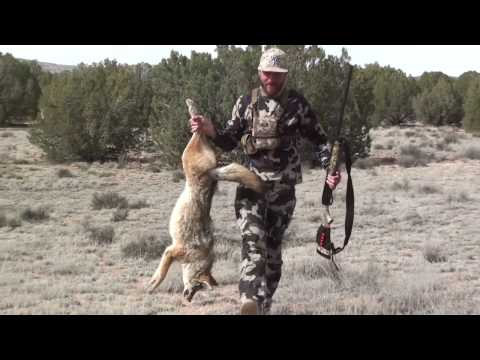 Arizona Coyote Hunt