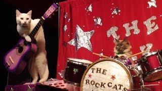 Do Animals Like Music? | Future Thinking | BRITLAB