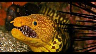 Подводный мир океана Гигантские Хищные Рыбы Мурена. Animals & fish.