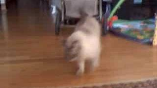 Kitten Little Fetches