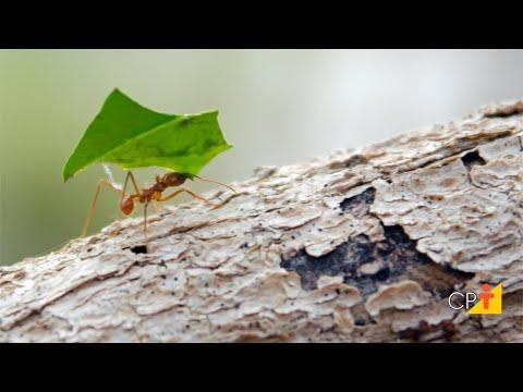 Curso a Distância Controle de Formigas Cortadeiras - Controle Biológico com Esterco Fresco