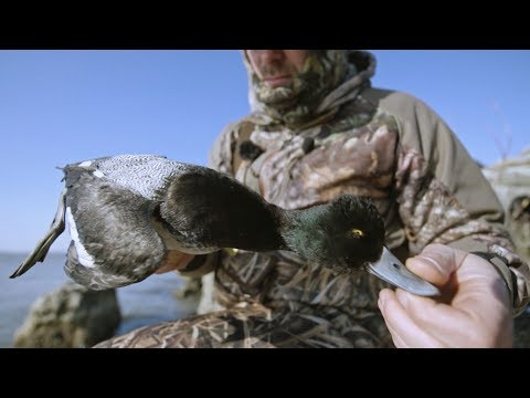 Lake Erie Diver Duck Hunting Video Avian X Desolation Youtube