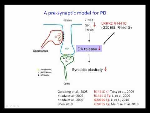 Genetic Analysis of LRRK2 by Jie Shen