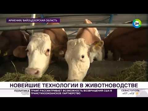 Автоматизированные фермы: как развивают животноводство в Армении