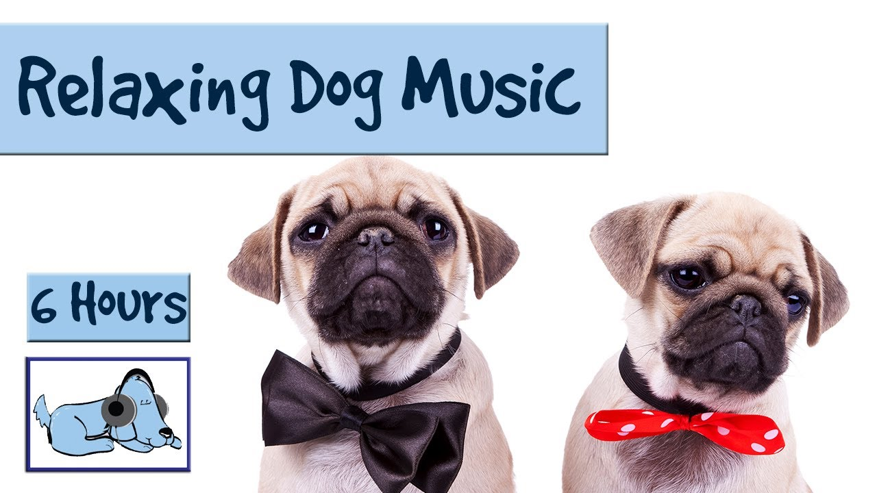 6 hours of relaxing dog music for separation anxiety and restless pups youtube. Black Bedroom Furniture Sets. Home Design Ideas