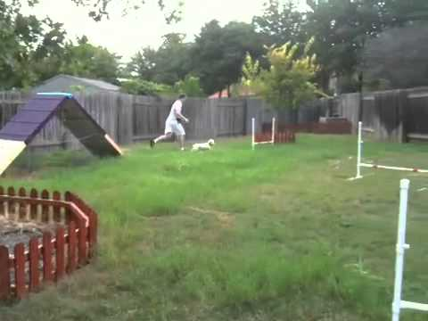 Ruby on homemade dog agility course - Ruby On Homemade Dog Agility Course - YouTube