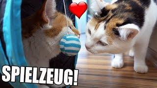 Günstige Katzen Gadgets von Amazon im Test!