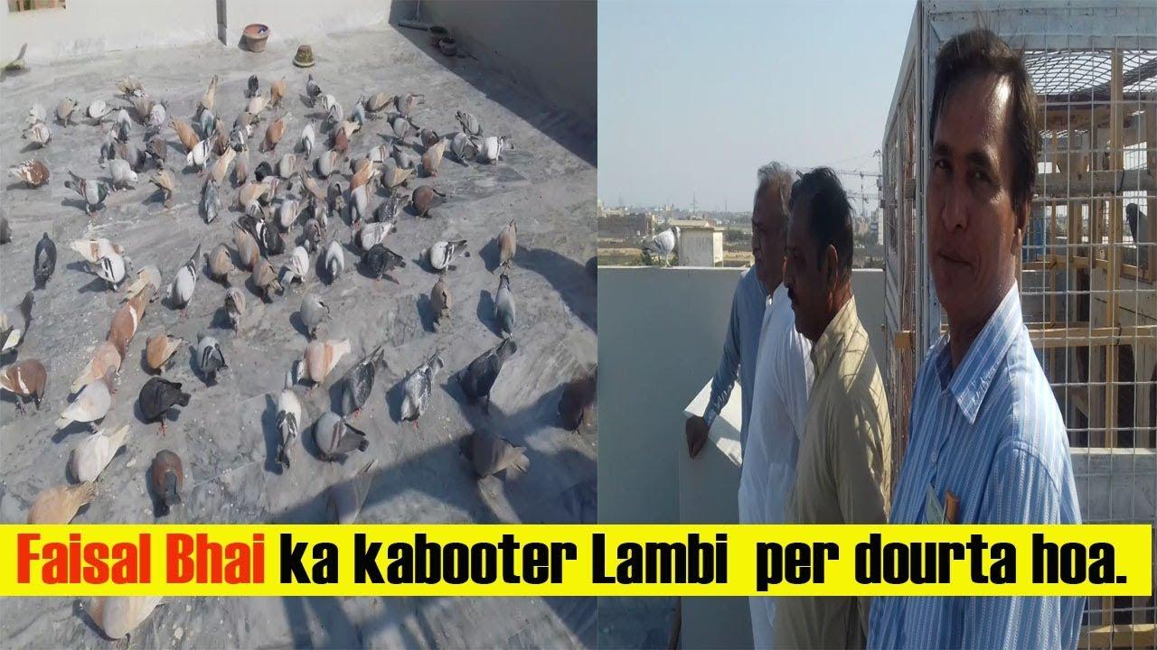 Faisal Bhai ka kabooter Lambi per dourta hoa (Sakht Garmi