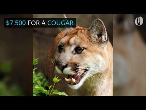 Oregon poachers face new penalties up to 50k