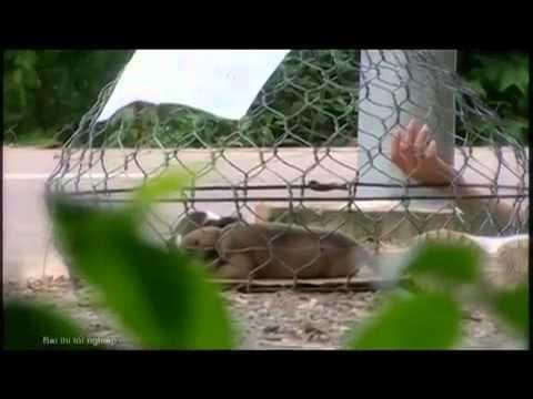 [Phim ngắn] Trái Tim Bạc - YouTube