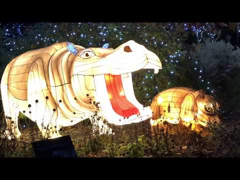 2017 Cincinnati Zoo Festival of Lights Walkthrough