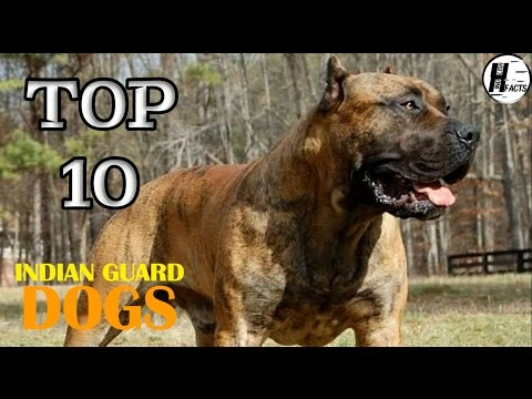 Top 10 INDIAN GUARD DOG BREED | TOP 10 LIST | HINGLISH FACTS
