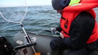 Диалоги о рыбалке. Калининград. Балтийская треска HD версия