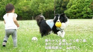 二歳になった孫。誕生日会に愛犬パル(ボーダーコリー)も招待してもらい...