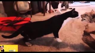 Кошки боятся огурцов! Пугливые кошки