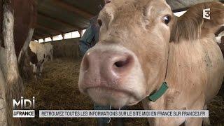 ANIMAUX : Dans le Vercors, le fromage est une affaire d'éleveurs