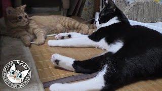 元気に遊びまわるようになったチャコちゃんを含めて5匹の猫たちをmaoi...