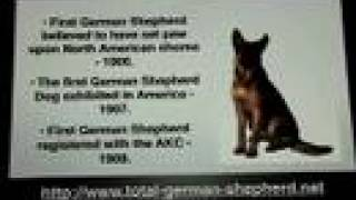 German Shepherd Dog - Gsd Information