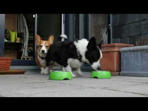 INTEWA Corgis love limescale-free water