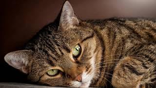 Знаете ли вы своего кота?
