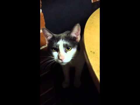Mozart mon chat