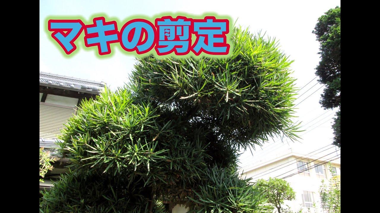 庭 の 手入れ 英語